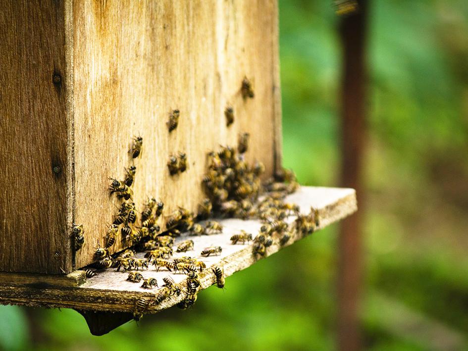 Die_Welt_ist_wie_ein_Bienenstock